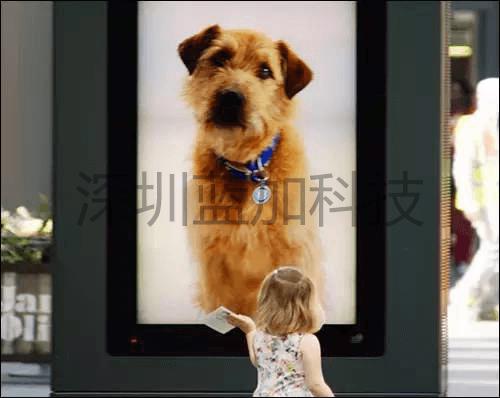 188BET_动物收容所使用RFID技术,吸引消费者注意